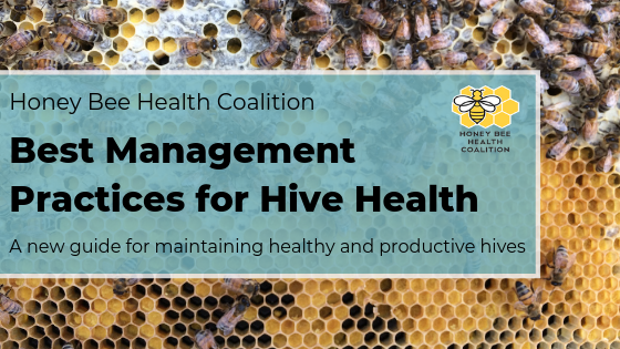 Best Management Practices for hive health
