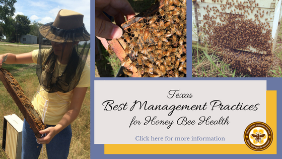 Texas Best Management Practices for Honey Bee Health